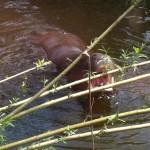 hungrig hippopopimus? ;P