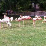 Fina Flamingos!!! OCH de är ROSA ;) hiiiih.....